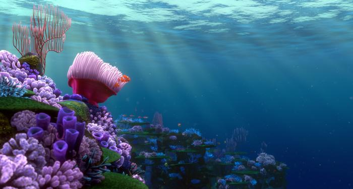 finding nemo coral reef - photo #13